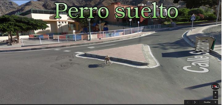 ¿Perro peligroso suelto captado por el Street View?